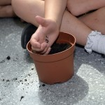 Close up of childs hand dropping seeds into a pot with filled with soil